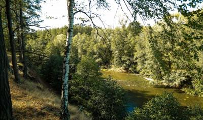 Флора и фауна национального парка «Бузулукский Бор»