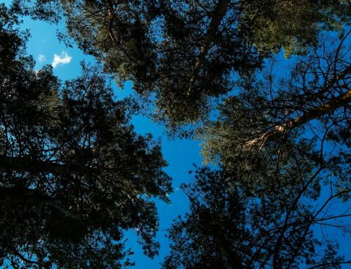 Особенности климатолечения в Бузулукском Бору