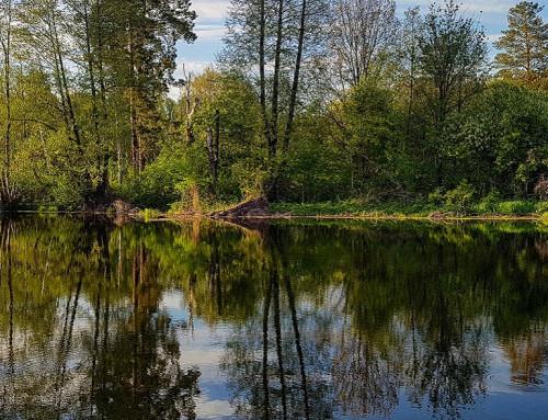 Достопримечательности Бора: озера Студеное и Холерное