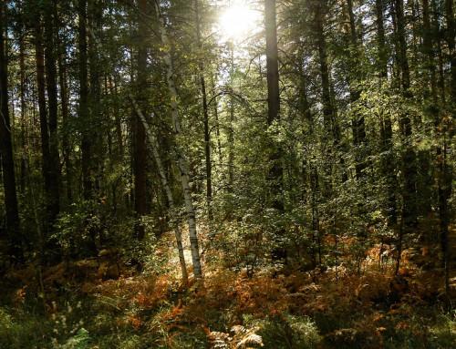 Пешие прогулки по лесу. Почему это важно?