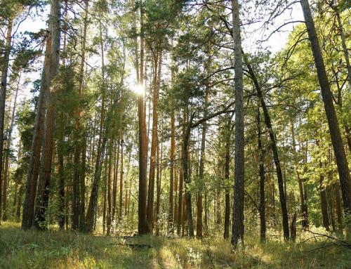 Разнообразие флоры и фауны Бузулукского Бора