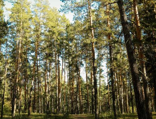Отдых в Бузулукском Бору: санаторий или дом отдыха?
